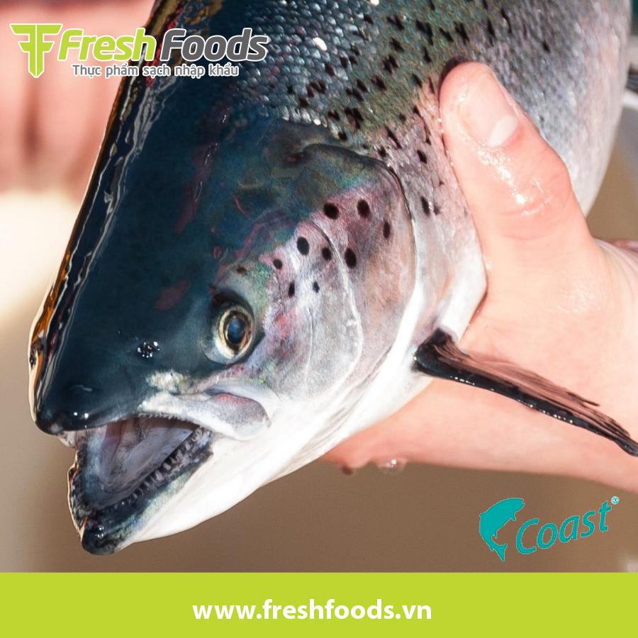 Cách phân biệt cá hồi hữu cơ & cá hồi thường
